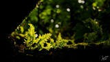 Backlit Ferns