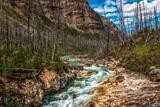 Deadwood at Marble Canyon – Kootenay National Park