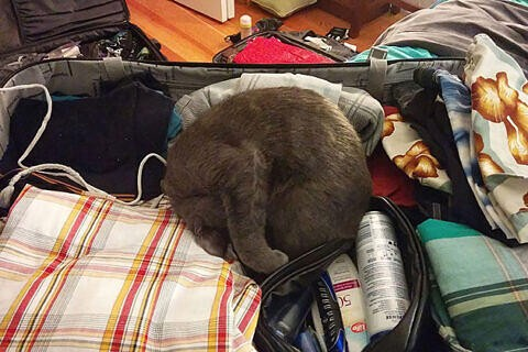 Lady Grey in the Suitcase