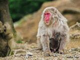 Permalink to Monkeys at Iwatayama Monkey Park