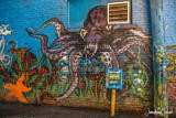 Octopus Graffiti