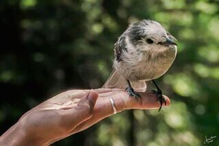 Rachelle the Bird Charmer