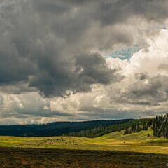 Where the Buffalo Roam - Yellowstone National Park