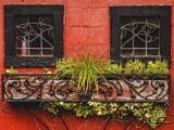 Windows and Ivy